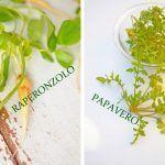 Raperonzoli & Papaveri